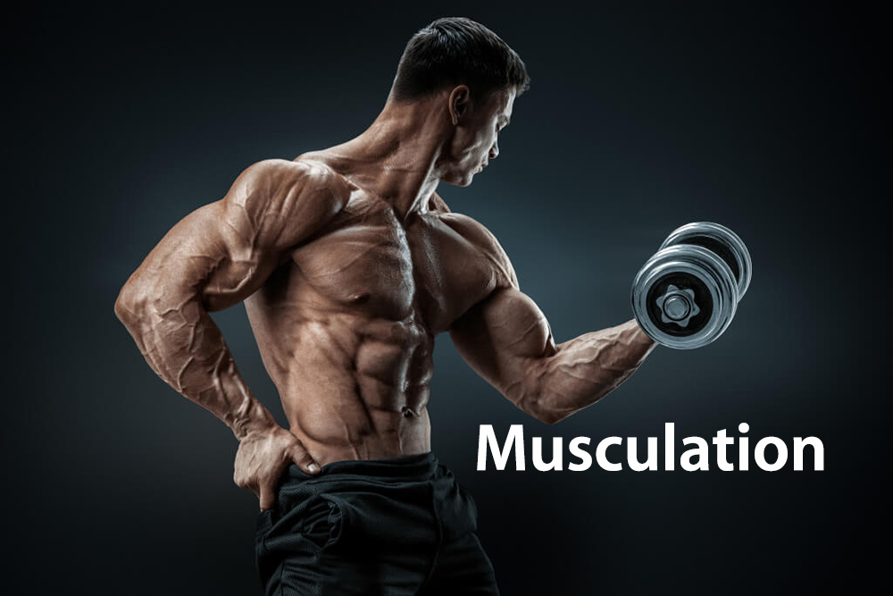 Activités sportives : muscu